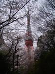 cherry tree tokyo tower