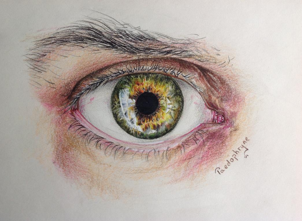 Eye by Paedophryne