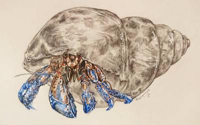 Hermit crab by Paedophryne