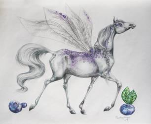 Fairy by Paedophryne