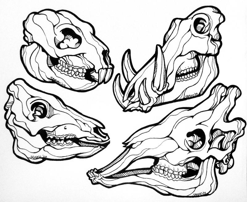 Line Drawing Skull : Animal skulls line art by sammo on deviantart