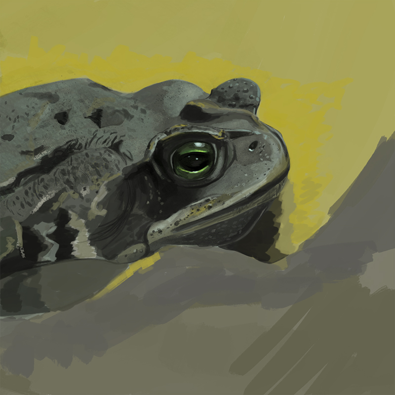 Froggy painting by Tori-Kell