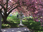 Peace in the Shade of the Cherry Blossom