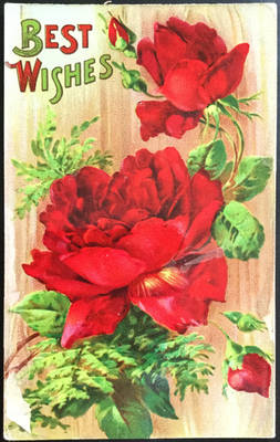 Flossie's Red Roses - Pure and Lovely