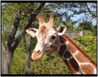 Giraffe by darknepenthe