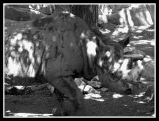 Black Rhino by darknepenthe