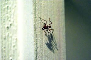 Leaf Cutter ant by Ljtigerlily