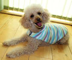 Peppermint stripes dog coat by Ljtigerlily