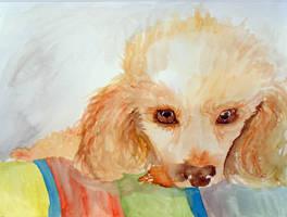Bailey Watercolour by Ljtigerlily