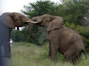 Dance between Giants