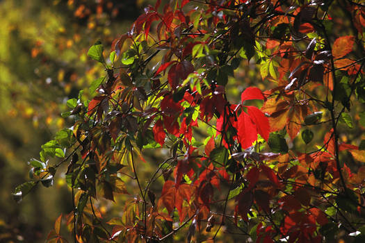 Autumn Laughts in Colors
