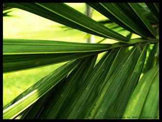palm leaf by zeSimpleThings