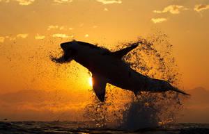 Sharks4 by 7honar