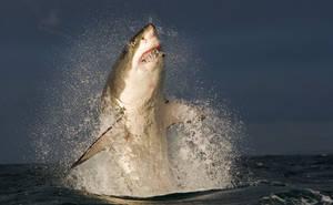 Sharks6 by 7honar
