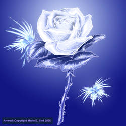 White Frost Rose