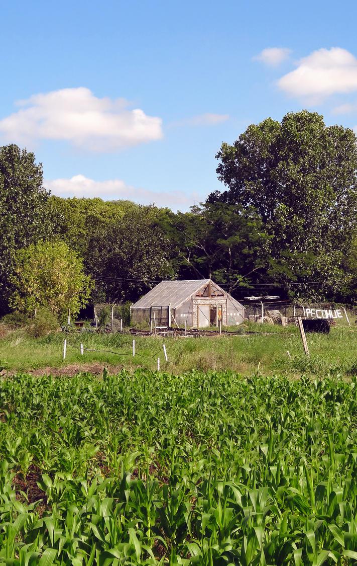 Farm by KAVALIER