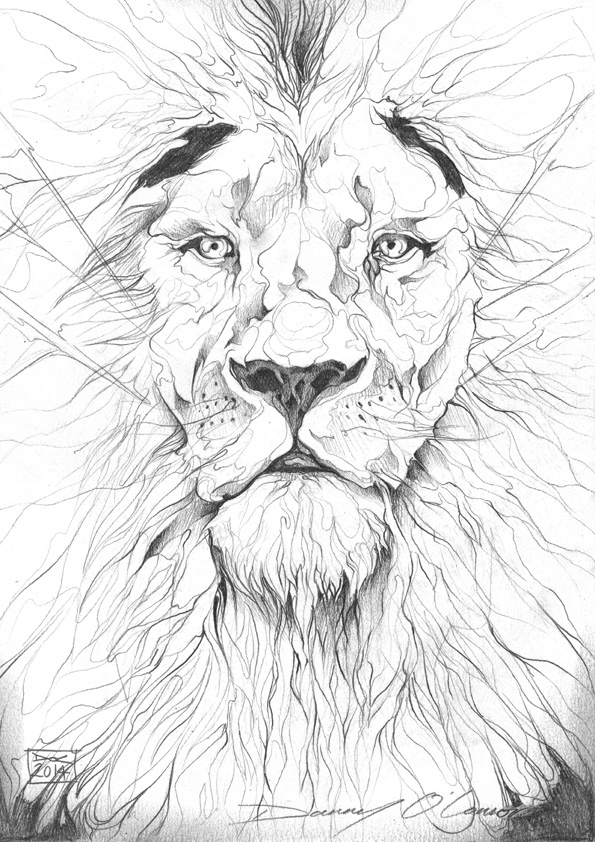 Angry Lion Pencil Drawing