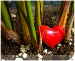 Heart by ser