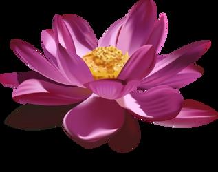 Lotus Blossom by Anlina