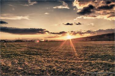 Fields of Sunhine by pociej