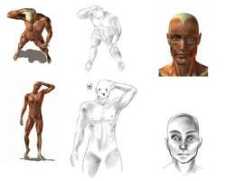+ Anatomy 1 + by WalkedAway