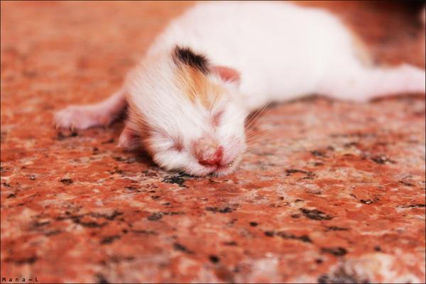 Sleeping Cutie by Mana-L