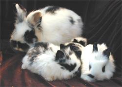bunnies by Kanata158