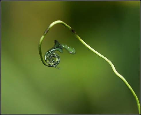 Plant-.Fagot..