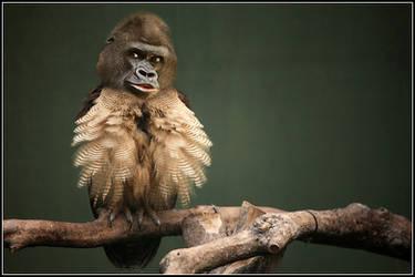 Owl-Orangutan...