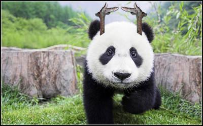 Cock claws, autistic panda ..