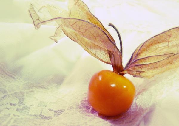 Orange - Page 2 Winter_Cherry_by_strippysocksrock