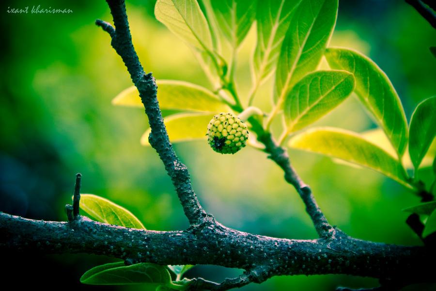 Little Fruit by ixant-88