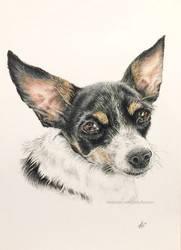 Nacho - Very good Doggo