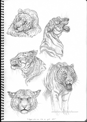 Tigers who are sick of your s**t