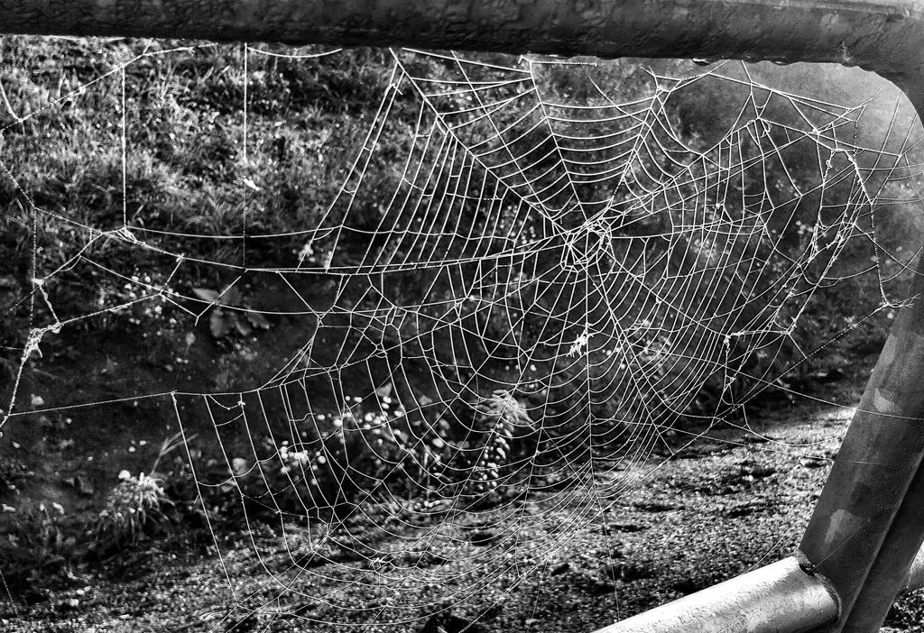 Spider web by identitetiskall