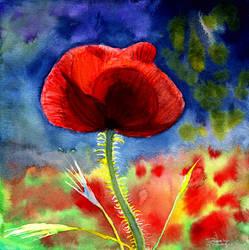 poppy by beckhanson