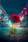 Little lost rose In the big city