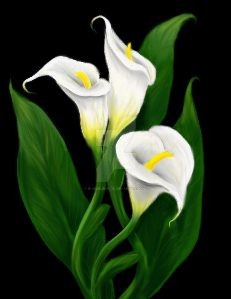 Calla Lilies By Invisiblehinge On Deviantart