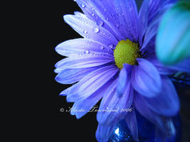 Simple Beauty by venusfire77