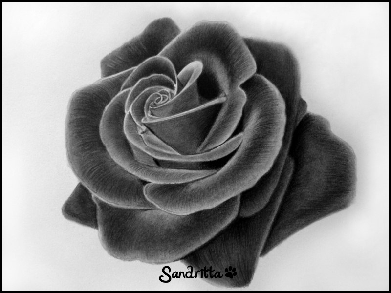 Kiss from a rose by sandritta88 on deviantart for How to draw a black and white rose