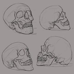 skull_sketches_1 by ksenolog