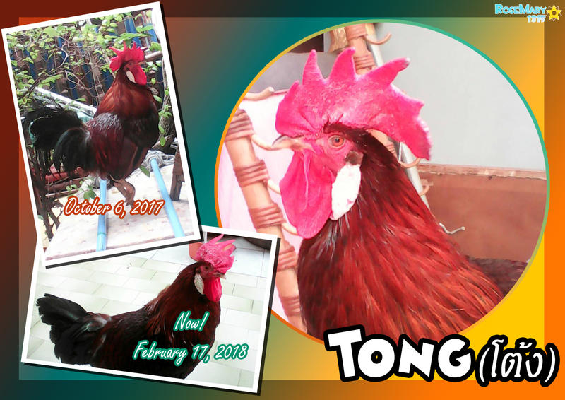 Tong the Rooster by RoseMary1315
