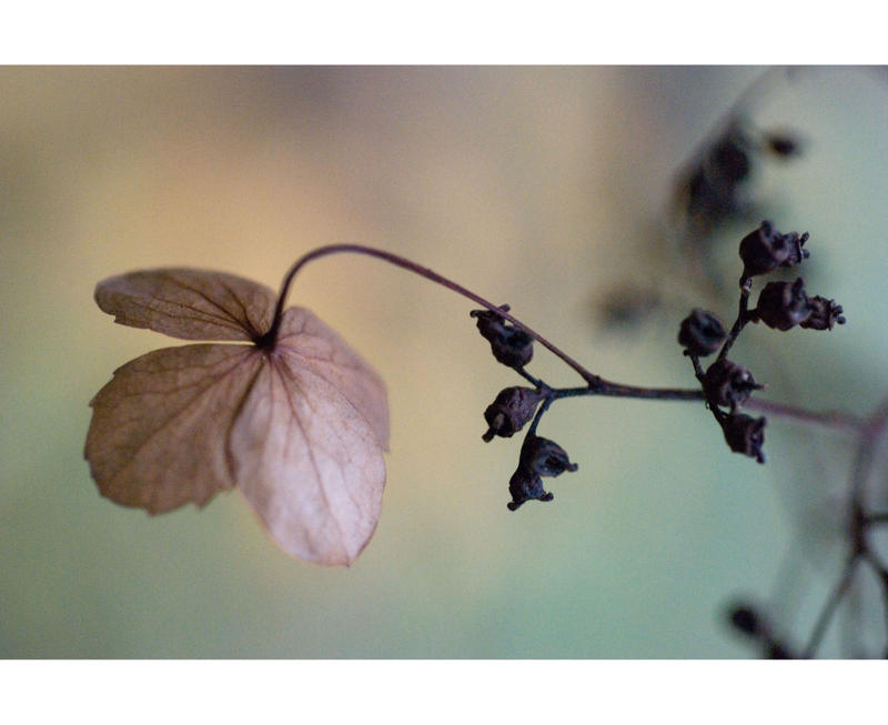 ...little treasures... by Gryczka