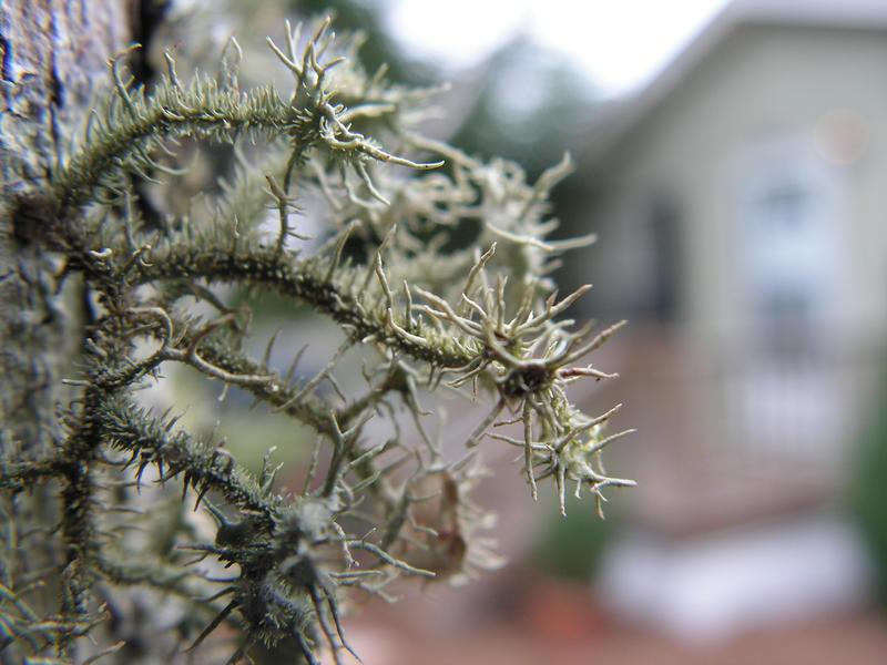 Lichens by makai-no-Karasu