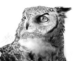 owl by bobocatllj