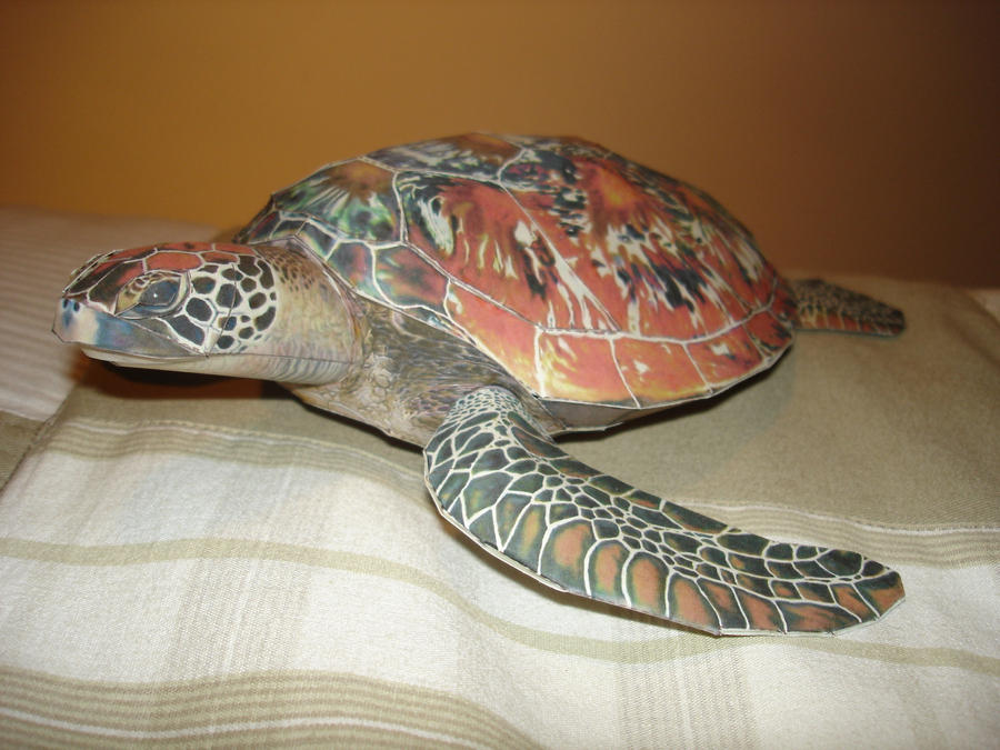 Sea Turtle Papercraft by BrunoPigh