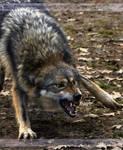 Big Bad Wolf 1008 by Sooper-Deviant
