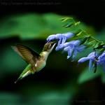 Sweet Nectar 1847