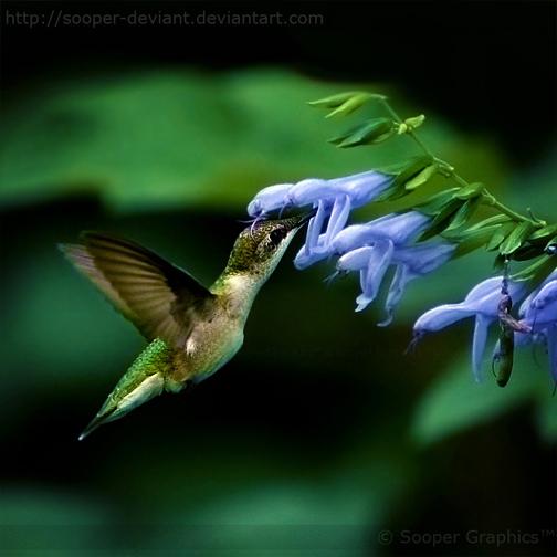 Sweet Nectar 1847 by Sooper-Deviant