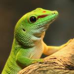 A Gecko With GEICO? 6784P